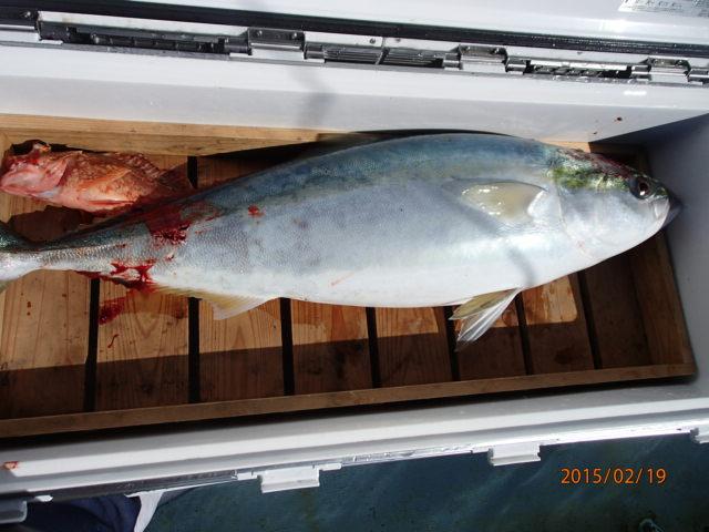 丸々太った素晴らしい魚体!
