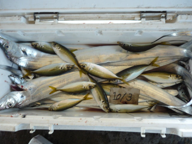 明日は小アジながらタチウオが見えないくらい釣ります!